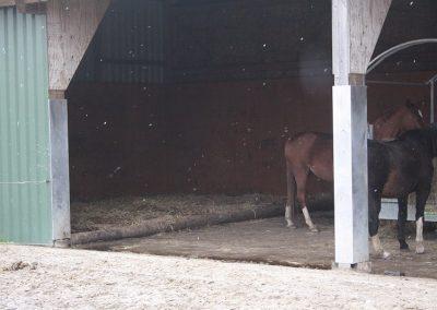 Klinter Hof Pferdepension Offenstall
